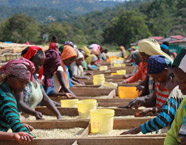 Fair Trade, Fair Wage? Research evidence from Ethiopia and Uganda