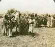 Wheat Harvest at Marj Ibn Amer, c.1910
