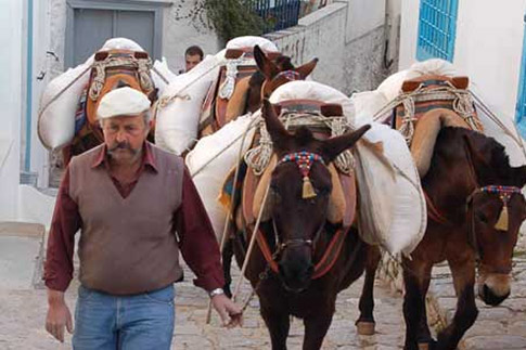 Photograph of Mastro Ilias with the mules. Photo: Ed Emery. It is my copyright and I grant permission for its usage.