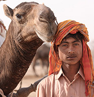 Camel and Boy, Pakistan [Photo: M. Arshad Hussain]