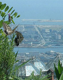 View of Kobe shore line from Mt Rokko. Pic by Rob Kennedy