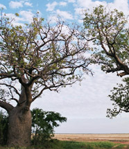 7th European Australianists tree image