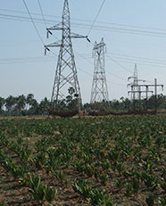 Crop field with pylons